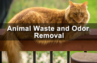 Animal Waste and Odor Removal